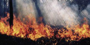 Pressione degli incendi sull'ambiente