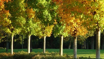 Progettare la citta' verde del futuro: la sfida di TreeCity
