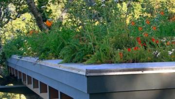 Coperture a verde: quali piante per i tetti della Lombardia?