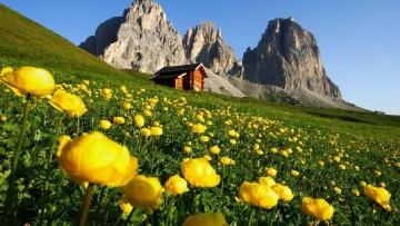 Quali sono le regioni piu' green d'Italia?