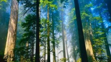 Al Premio Innovazione Amica dell'Ambiente 2013 vince anche una tassa