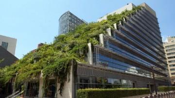 I tetti verdi e i vantaggi della progettazione sostenibile