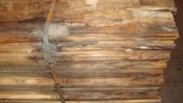 Degrado del legno: come agiscono i funghi cromogeni