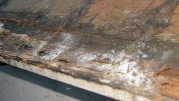 Degrado del legno: come agiscono i funghi cariogeni