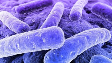 Legionella: le nuove linee guida per il controllo e la prevenzione