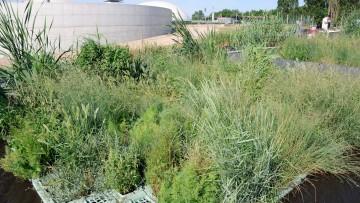 La fitodepurazione per il trattamento delle acque reflue agro-industriali