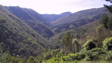 Le biomasse dei boschi di Prato