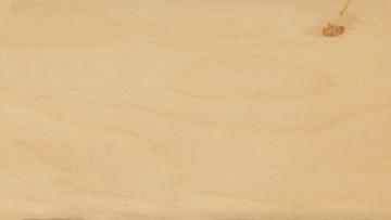 Pannelli in legno compensato: le caratteristiche di un materiale fatto a strati