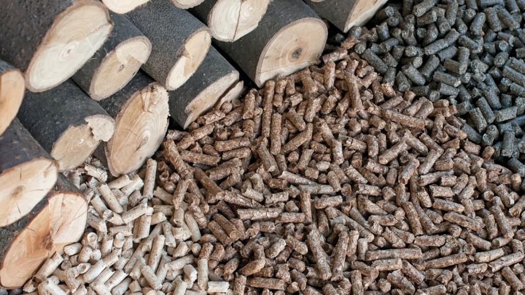 biomassa_legnosa_foto di copertina