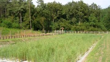Fitodepurazione: come scegliere le piante più adatte