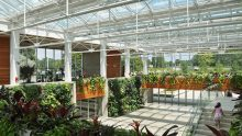 Come usare il verde verticale per il trattamento naturale dell'aria