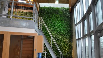 La parete verde come sistema di fitodepurazione