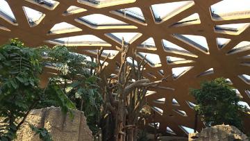 """Elephant House: il BIM per la progettazione della nuova """"casa"""" degli elefanti allo zoo di Zurigo"""