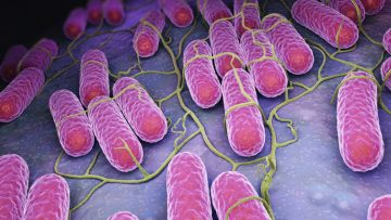 Bioingegneria: una piattaforma per studiare l'asse microbiota-intestino-cervello