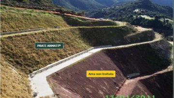 Ingegneria naturalistica: la radicazione profonda a crescita rapida contro l'erosione