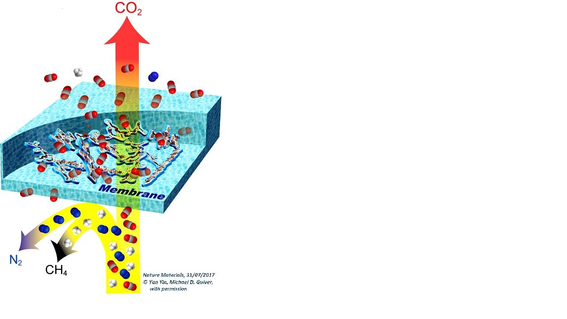 Rappresentazione schematica del trasporto attraverso una membrana con elevata selettività per la CO2 rispetto ad azoto e metano