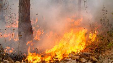 Incendi in Campania: lo scenario di rischio e il piano di intervento