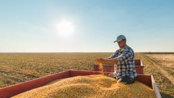 DVR agricoltura: i responsabili della sicurezza in un'azienda agricola e i rischi