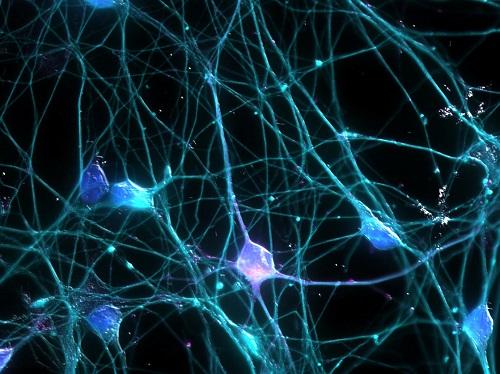 Rete-neurale-colori