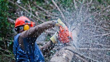 Guida alla sicurezza nei cantieri forestali