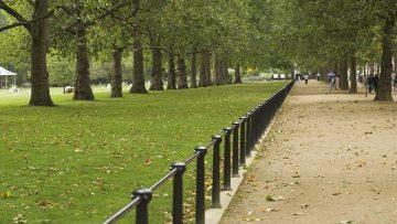 Cittadino albero, la Compagnia di San Paolo sostiene le aree verdi urbane