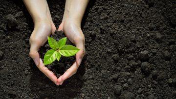 Agricoltura Biodinamica, convegno internazionale a Milano