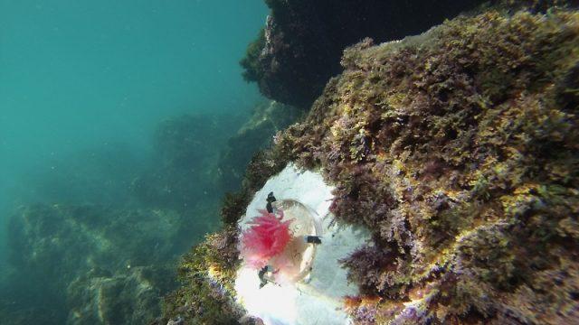 ENEA testa alghe sosia 3D per monitorare i fondali marini