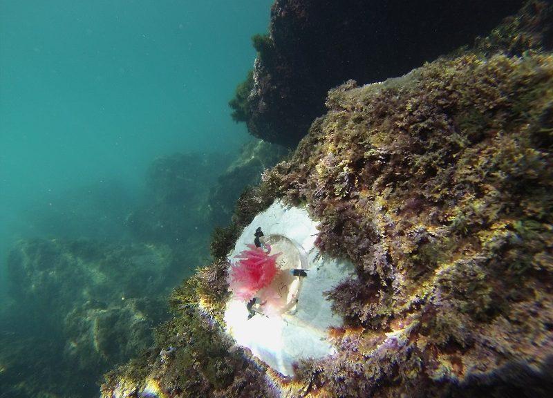 L'alga artificale Mimics