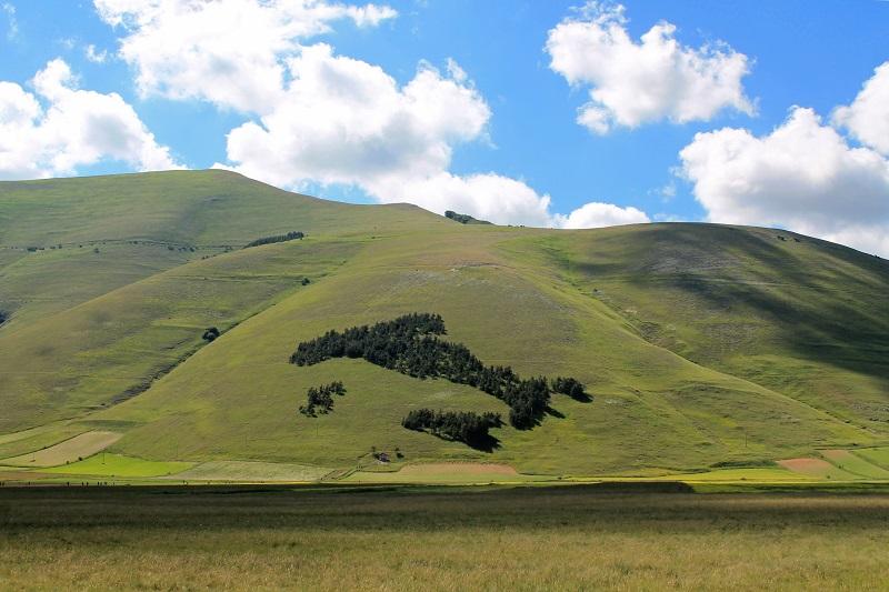Il bosco a forma d'Italia a Castelluccio di Norcia